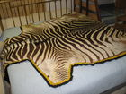 Zebra hide- Authentic