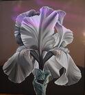 361. Lg. Bearded Iris painting