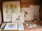 90 Botanical/bird print lot